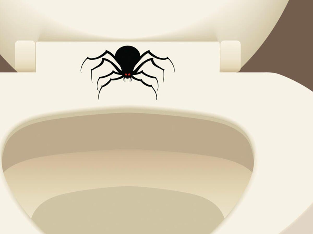 Spinnen gift gegen Heilkräuter und
