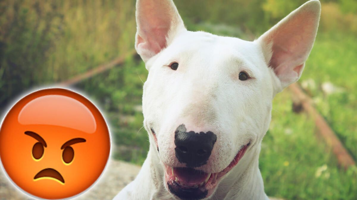 Hund Tätowiert