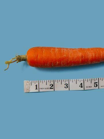 Pimmel, Hoden & Co.: Alles über den Penis