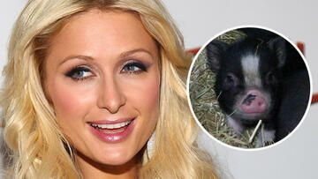 paris-hilton-und-princess-pigelette-getty-images-twitter-557x313-546467.jpg